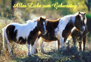 Gluckwunsche Zum Geburtstag Pferd Gloriarerelist Site