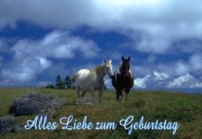 Gluckwunsche Geburtstag Pferde Geburtstagsspruche Von Herzen
